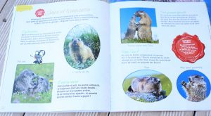 Marmottes magazine