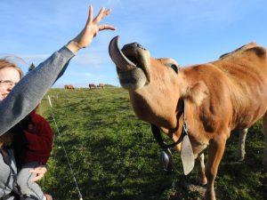 vache-semnoz-langue
