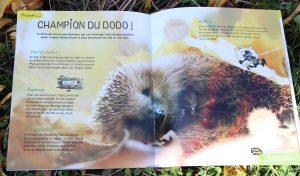 herisson-salamandre-magasine