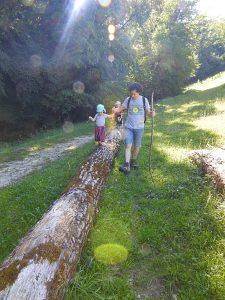 tronc-arbre-foret-corbonod